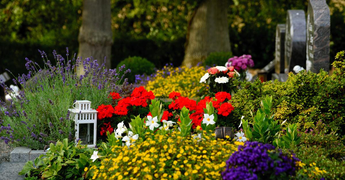 Blommor och en lykta vid en grav på en gravgård.